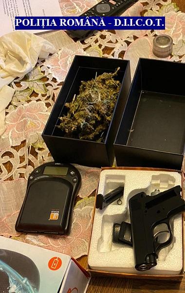 Trei culturi de cannabis cu 61 de plante, descoperite de polițiștii arădeni (VIDEO + GALERIE FOTO)
