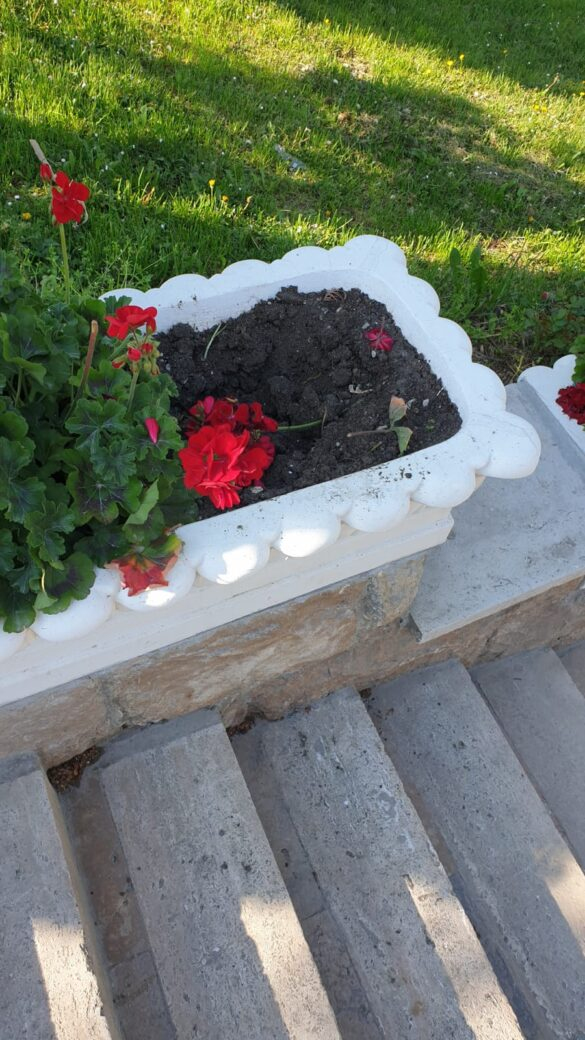 Societatea civilă din Arad pusă la zid de infractori? Flori furate și graffiti (GALERIE FOTO)